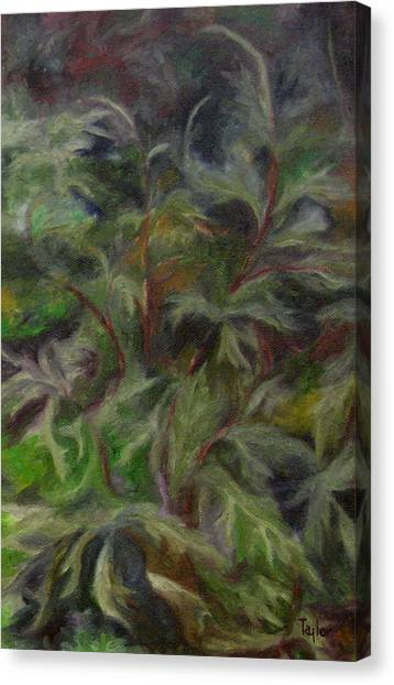 Bugbane Canvas Print