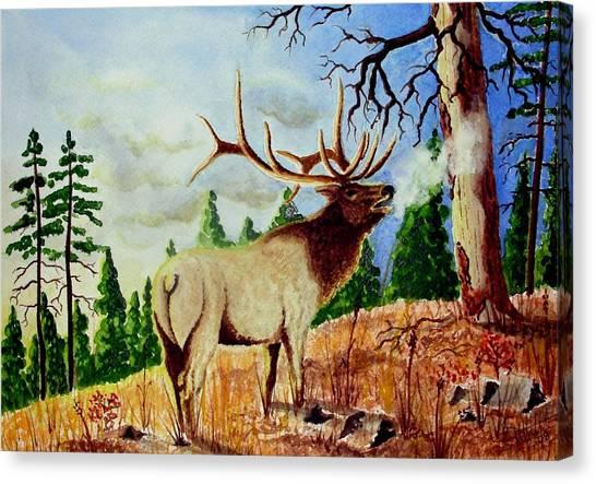Bugling Elk Canvas Print