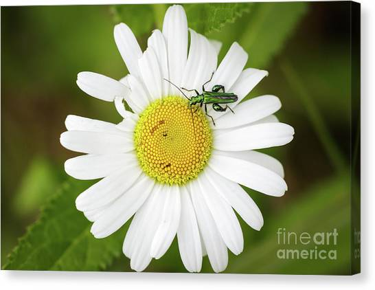Bugs Life Canvas Print
