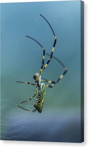 Spider Web Canvas Print - Build A Net by Hyuntae Kim