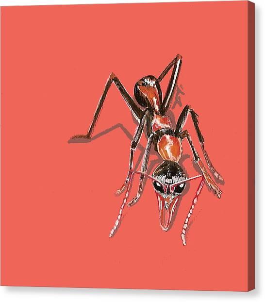 Bull Ant Canvas Print