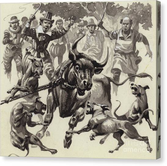 English Bull Dogs Canvas Print - Bull Baiting by Pat Nicolle