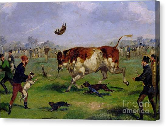 English Bull Dogs Canvas Print - Bull Baiting by Samuel Henry Alken