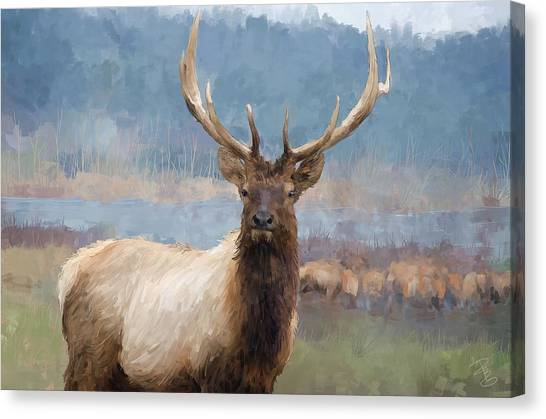 Bull Elk By The River Canvas Print