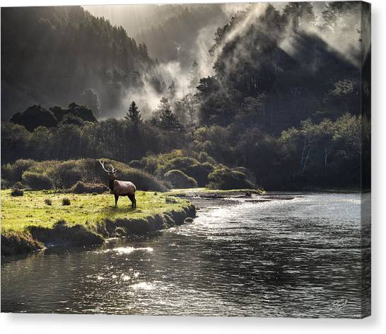 Bull Elk In Wilderness Canvas Print