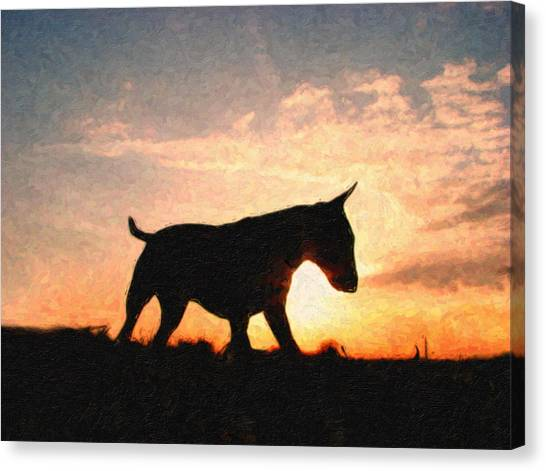 Bulls Canvas Print - Bull Terrier At Sunset by Michael Tompsett