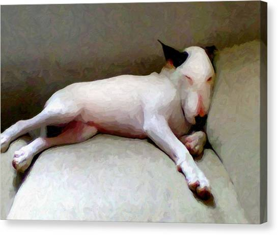 Bulls Canvas Print - Bull Terrier Sleeping by Michael Tompsett