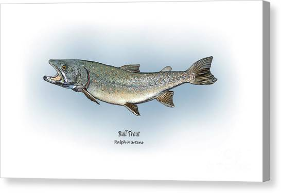 Angling Art Canvas Print - Bull Trout by Ralph Martens