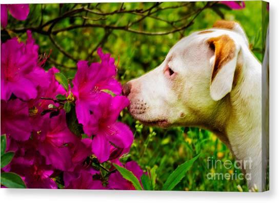 Bulldog Flowers Canvas Print