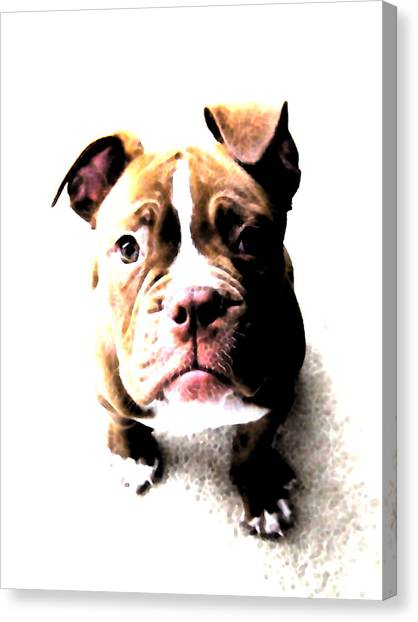 Puppies Canvas Print - Bulldog Puppy by Michael Tompsett