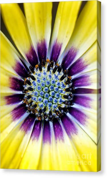 Center Glow Canvas Print - Bulls Eye by Darren Fisher