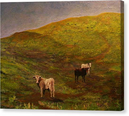 Bulls On Figueroa Mt. Canvas Print by Trish Campbell