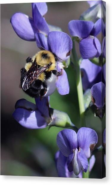 Bumble Bee, Blue Indigo Canvas Print