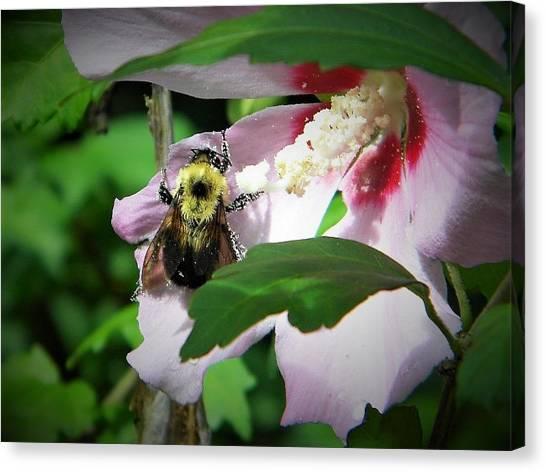 Bumble Bee Gathering Pollen Canvas Print