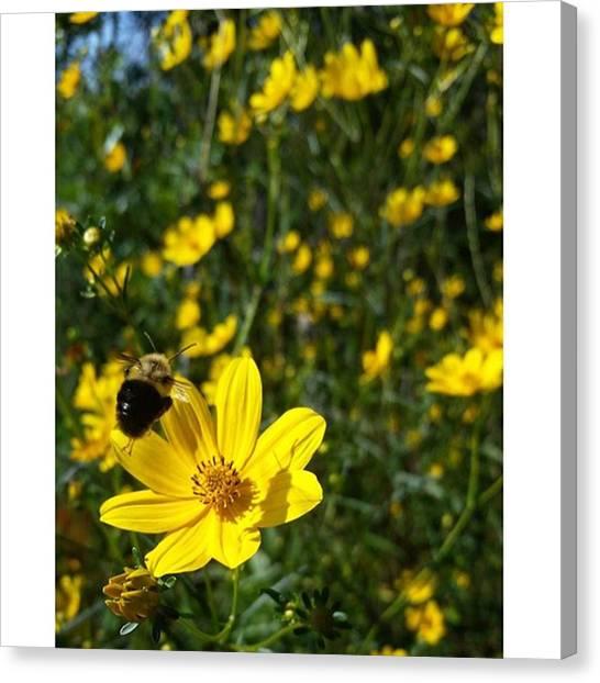Okefenokee Canvas Print - Bumble Bee In Flight :0) #bee by Karen Breeze
