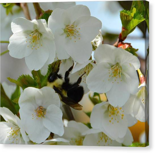 Bumble Bee In Hiding Canvas Print
