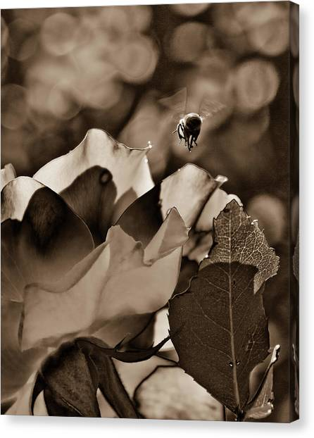 Bumble Canvas Print by Monroe Snook