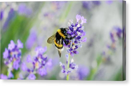 Canvas Print featuring the photograph Bumblebee by Bee-Bee Deigner