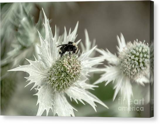 Bumblebee On Thistle Flower Canvas Print
