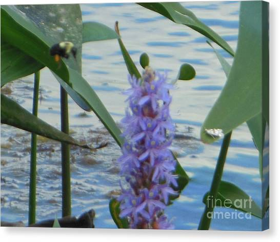 Bumblebee Pickerelweed Moth Canvas Print