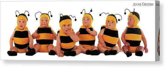 Canvas Print - Bumblee Bees by Anne Geddes