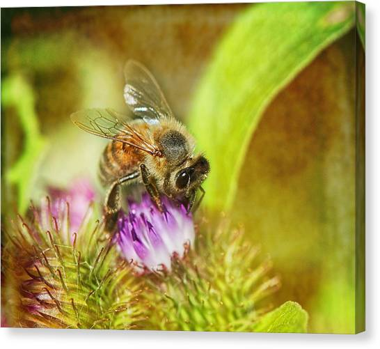 Pollinator Canvas Print - Bumbling Bee by Susan Capuano
