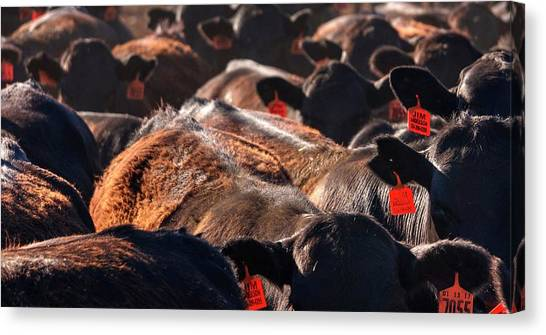 Canvas Print featuring the photograph Bumper To Bumper by Quality HDR Photography