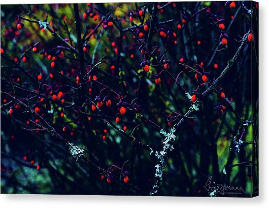 Canvas Print featuring the photograph Reds by Gene Garnace