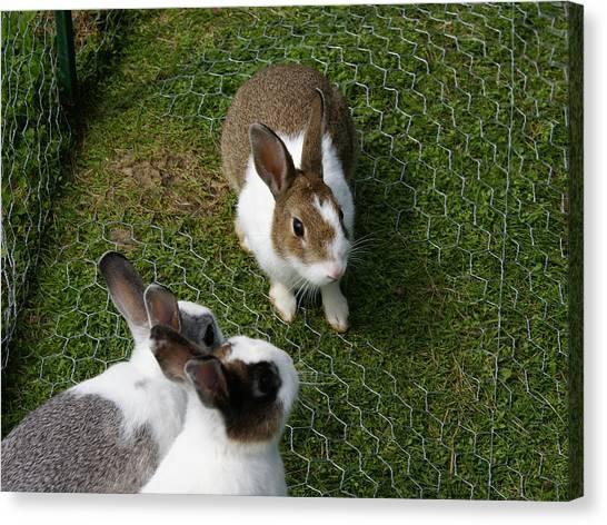 Rabbit Canvas Print - Bunnies by Lisa Hebert
