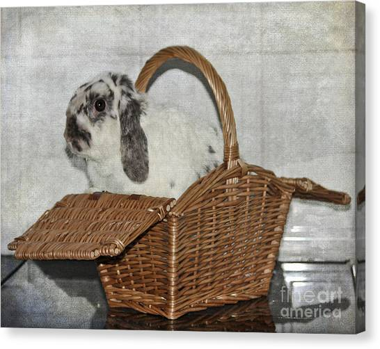 Easter Baskets Canvas Print - Bunny In A Basket by Terri Waters