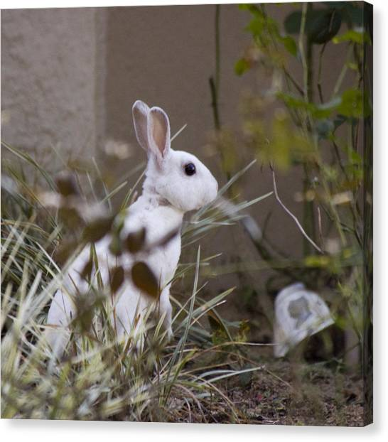 Bunny In The Garden Canvas Print by Anthony Towers
