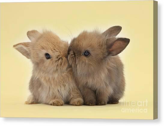 Bunny Kisses Canvas Print