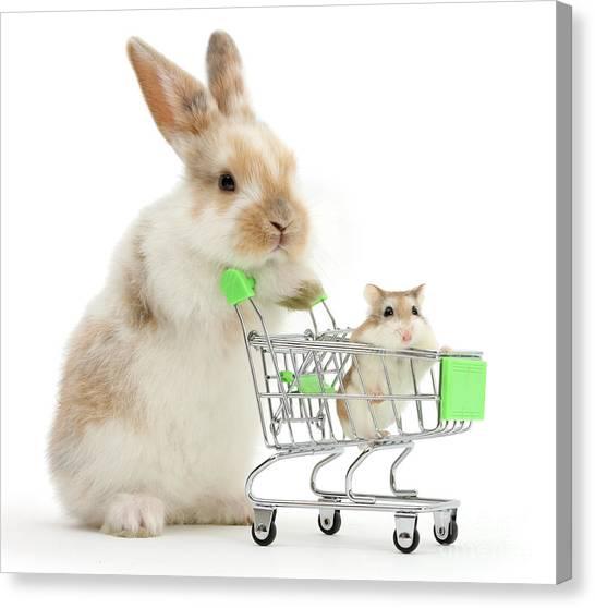 Bunny Shopping Canvas Print