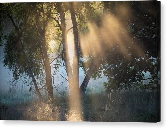 Sherwood Forest Canvas Print - Burning Off by Chris Dale