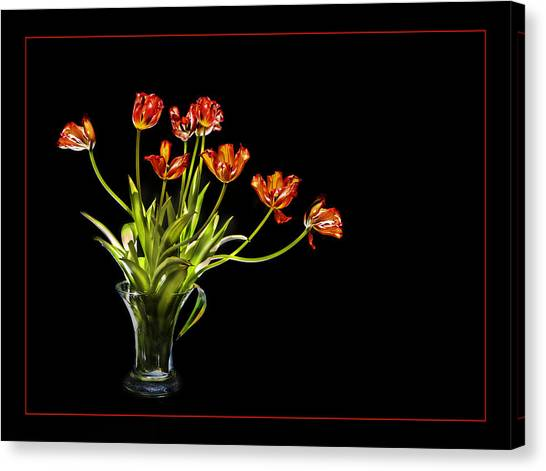 Burnt Orange Tulips Canvas Print