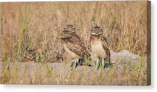 Burrowing Owl Party Canvas Print
