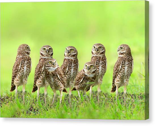 Burrowing Owl Canvas Print by Thy Bun