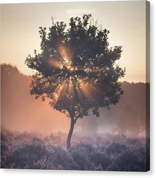 Sherwood Forest Canvas Print - Burst by Chris Dale