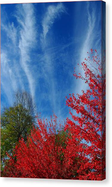 Burst Of Color Canvas Print by Gerry Tetz