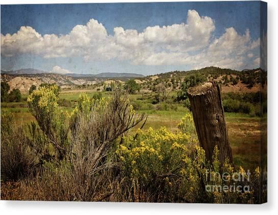 Bush Creek Canvas Print