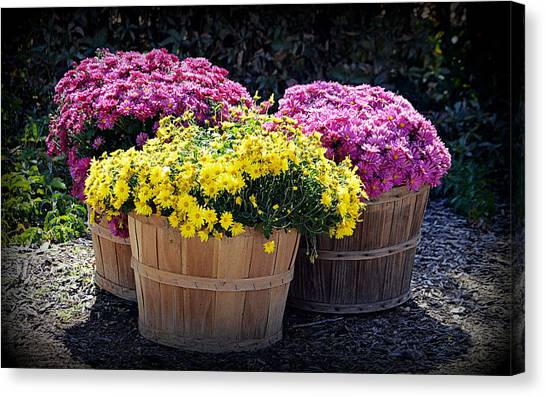 Canvas Print featuring the photograph Bushels Of Fall Flowers by AJ Schibig