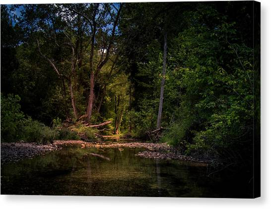 Busiek State Forest Canvas Print