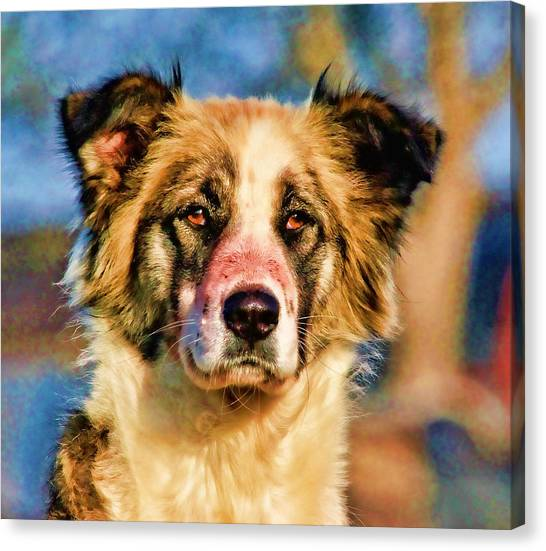 Lucky Canvas Print - Buster Dog Viewing The Sunset by Lucky Chen