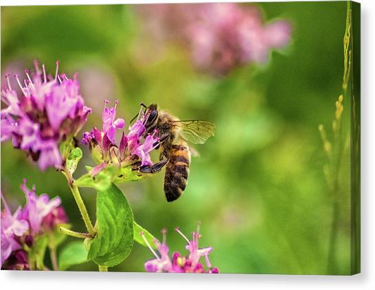 Wasp.insect Canvas Print - Busy At Work by Martin Newman