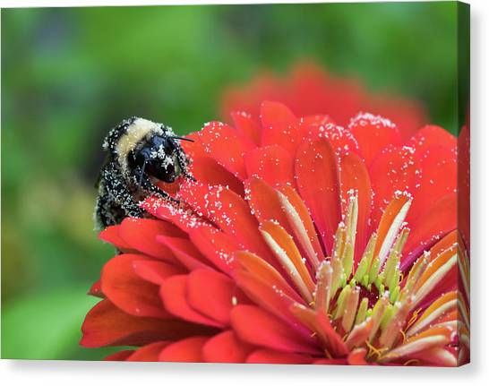 Busy Bee Canvas Print by Denise McKay