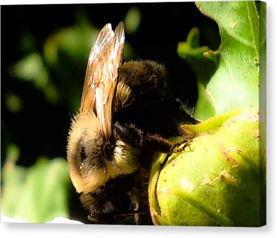 Border Wall Canvas Print - Busy Bumble Bee In Summer by Debra Lynch