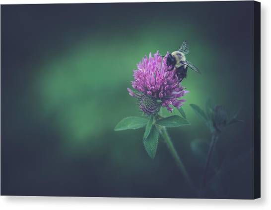 Clover Canvas Print - Busy by Shane Holsclaw