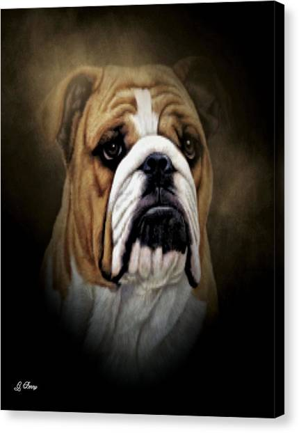 English Bull Dogs Canvas Print - Butch by G Berry