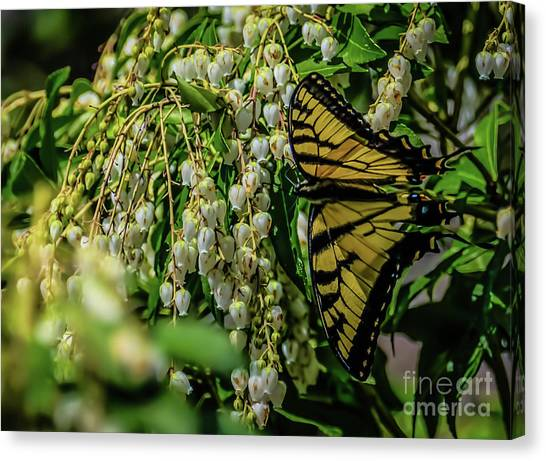 Butterflies Are Free Canvas Print