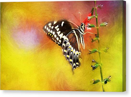 Butterflies Are Self Propelled Flowers Canvas Print